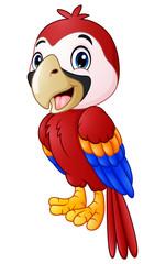 Funny macaw bird cartoon