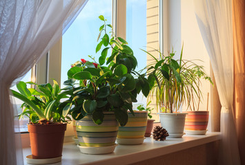 Potted green plants on window at sunset