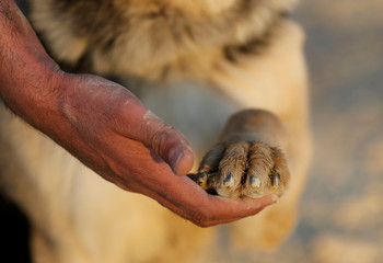 Palestinian police officer touches the paw of a dog at a dog training facility in the West Bank city of Hebron