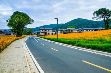 Road in  flower sea in nianhua wan town,lingshan,wuxi
