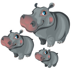 Cartoon hippo on white background. Vector animals