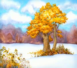 Yellowing oaks in a snowy field