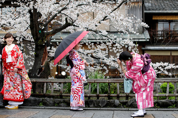 Women wearing Kimonos pose for a souvenir photo with blooming cherry blossoms in Kyoto