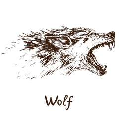 Gray Wolf (timber wolf or western wolf) howling face, open mouth with sharp canines, hand drawn doodle, sketch in pop art style, vector illustration