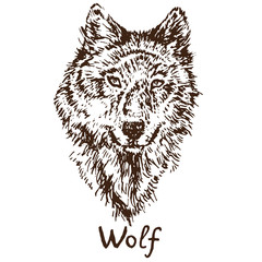 Gray Wolf (timber wolf or western wolf) face, hand drawn doodle, sketch in pop art style, vector illustration