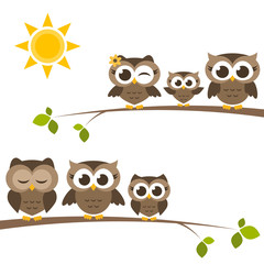 brown owls and owlets on the tree
