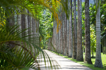 Scenic path lined with palm trees viewed through palm fronds