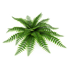 Green fern on white. 3D illustration