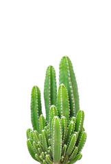 Foto op Plexiglas Cactus Cactus isolated on white background