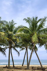 coconut trees stand on the sandy beaches with clouds and blue sky as the backdrop