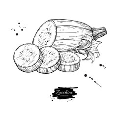 Zucchini hand drawn vector illustration. Isolated Vegetable engr