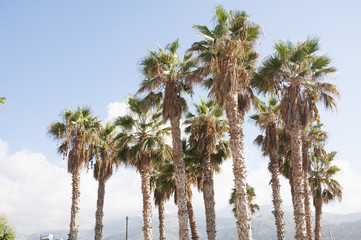 Palm trees in the blue sky