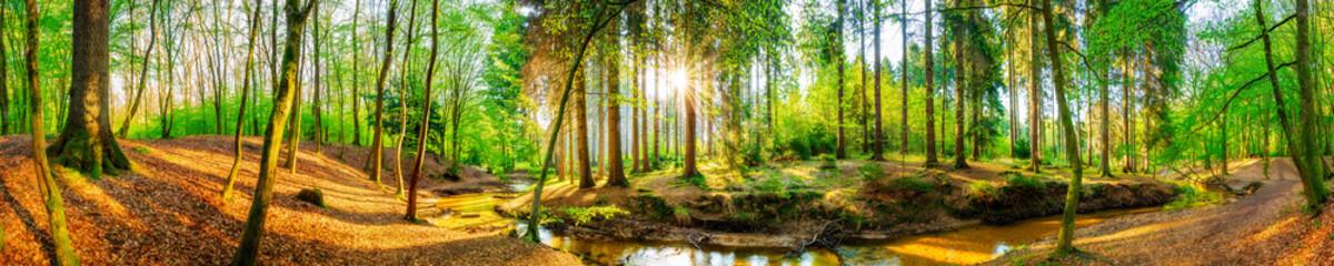 Fototapete - Wald Panorama mit Bach und Sonne