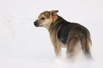 Dog in winter on snow background.