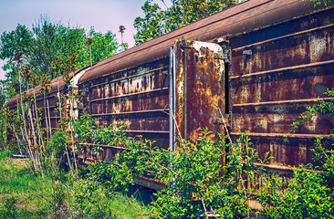 Old refrigerated railway wagon captured by vegetation.