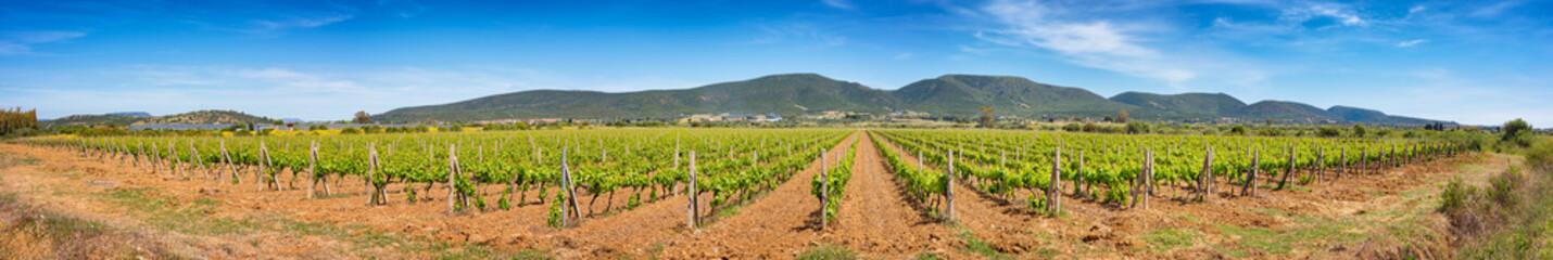 Poster Wijngaard Panoramic view of a large Sardinian vineyard in spring