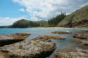 Coastline of New Caledonia landscape, beach and rocks with Araucaria pines, Turtle bay, Bourail, Grande Terre island, south Pacific