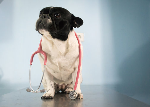 Veterinary clinic for pets