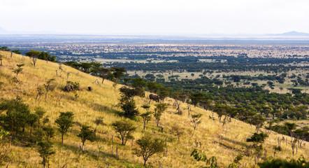 African Landscape   Tanzania  Africa