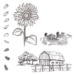 Hand drawn vector illustration set of monochrome sunflower, grain, seed, farm. sketch. Vector eps 8