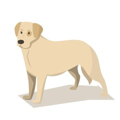 Dog breed Labrador Retriever. Cartoon style, vector.