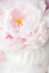 Ever so Delicate - Floral blur, Pink Peony