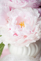 Light pink double Peonies in white ceramic vase.