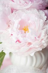 Light pink double Peonies in white ceramic vase.