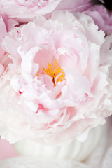 Fresh Cut Spring Flowers Light Pink Peonies