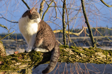 Domestic cat sitting on a mossy tree branch.