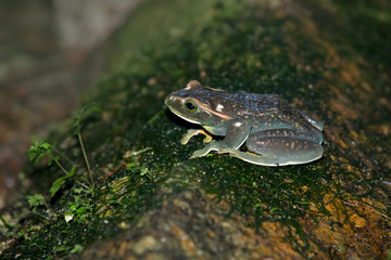 frog on rock in the florest