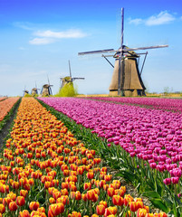 Magical fairy fascinating landscape with flowers tulip field in Holland, Europe (meditation, anti-stress, Harmony - concept)