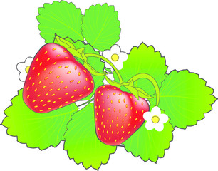 Ripe red cartoon strawberry with green leaves and white flowers.