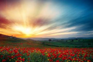 Zen tramonto con fiori di papavero