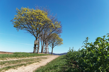 Yellow tree with raised hide and blue sky.