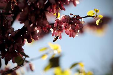 пчела собирает мёд на цветке розового цвета на дереве