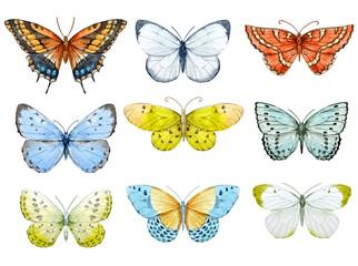 Watercolor butterflies set