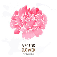 Hand drawn vector realistic illustration of dahlia flower