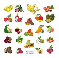 exotic tropical fruits hand drawn set. Collection of whole fruit and cutaway. Avocado, Ackee, Banana, Guava, Dogwood, Durian, Figs, Carambola, Kiwano, Coconut, Lychee, Longan, Mango, Mangosteen.