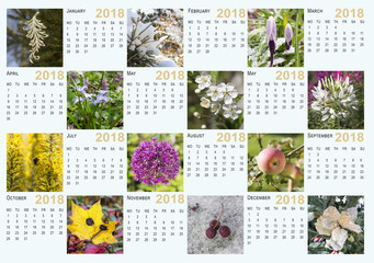 Calendar for 2018 with photos of plants in different seasons of the year