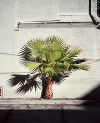 Small palm tree on sidewalk outside building