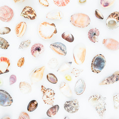 Natural pattern of tropical sea shells on white background. Flat lay. Top view. Ocean background