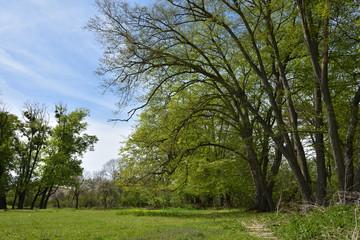 Green vibrant park