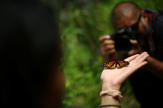 A Monarch butterfly rests on a visitor's hand during the official Inauguration of the month of the Monarch butterfly at Chapultepec Zoo in Mexico City