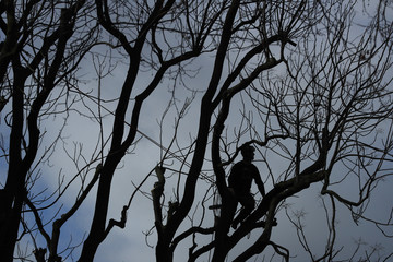 A tree surgeon is silhouetted against the sky while he works in central London