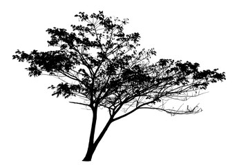 Tree silhouette on white background : vector