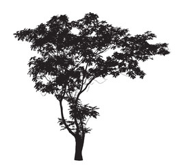 Lead Tree silhouette : Detailed vector