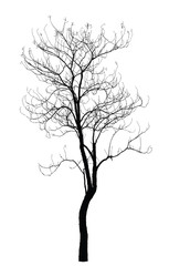 Tree silhouette : detailed vector illustration
