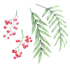 Vector red pepper tree branches hand painted watercolor set