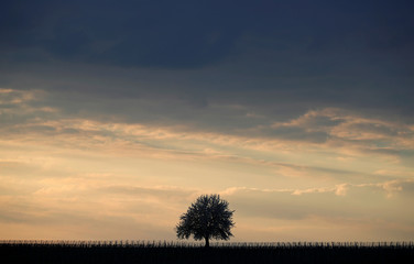 A tree is silhouetted under dark clouds during sunset on a mild spring evening near Strasbourg